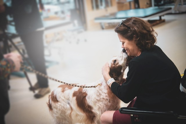Brown and white spotted therapy dog with patient