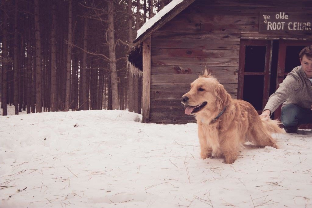 Dawson Hoffman's dog Max in the snow